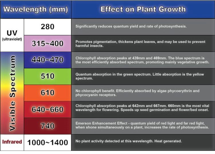 Wavelengths For Effective Plant Growth Horti Master